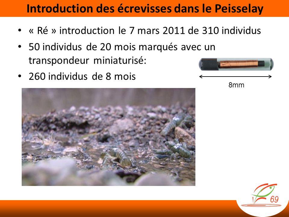 « Ré » introduction le 7 mars 2011 de 310 individus 50 individus de 20 mois marqués avec un transpondeur miniaturisé: 260 individus de 8 mois 8mm Introduction des écrevisses dans le Peisselay