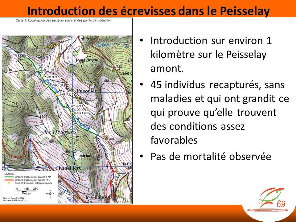 Introduction sur environ 1 kilomètre sur le Peisselay amont.