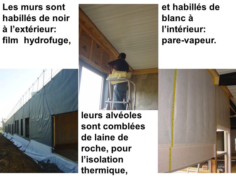 Les murs sont habillés de noir à lextérieur: film hydrofuge, leurs alvéoles sont comblées de laine de roche, pour lisolation thermique, et habillés de