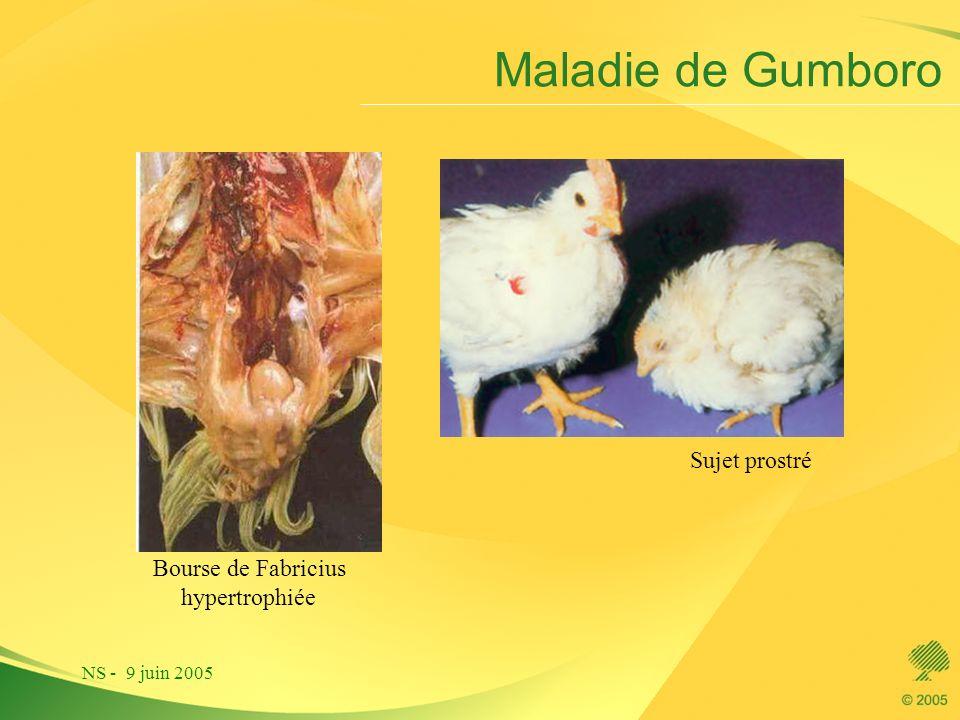 NS - 9 juin 2005 Maladie de Gumboro Sujet prostré Bourse de Fabricius hypertrophiée