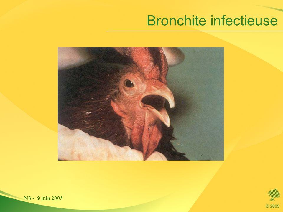 NS - 9 juin 2005 Bronchite infectieuse