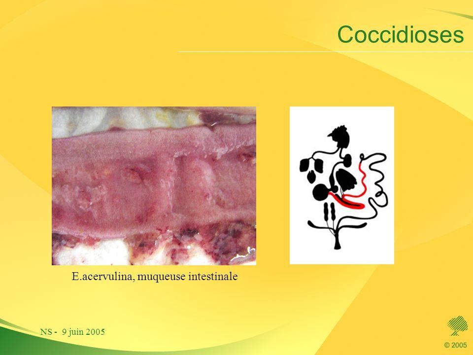 NS - 9 juin 2005 Coccidioses E.acervulina, muqueuse intestinale