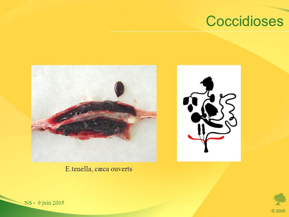 NS - 9 juin 2005 Coccidioses E.tenella, cæca ouverts