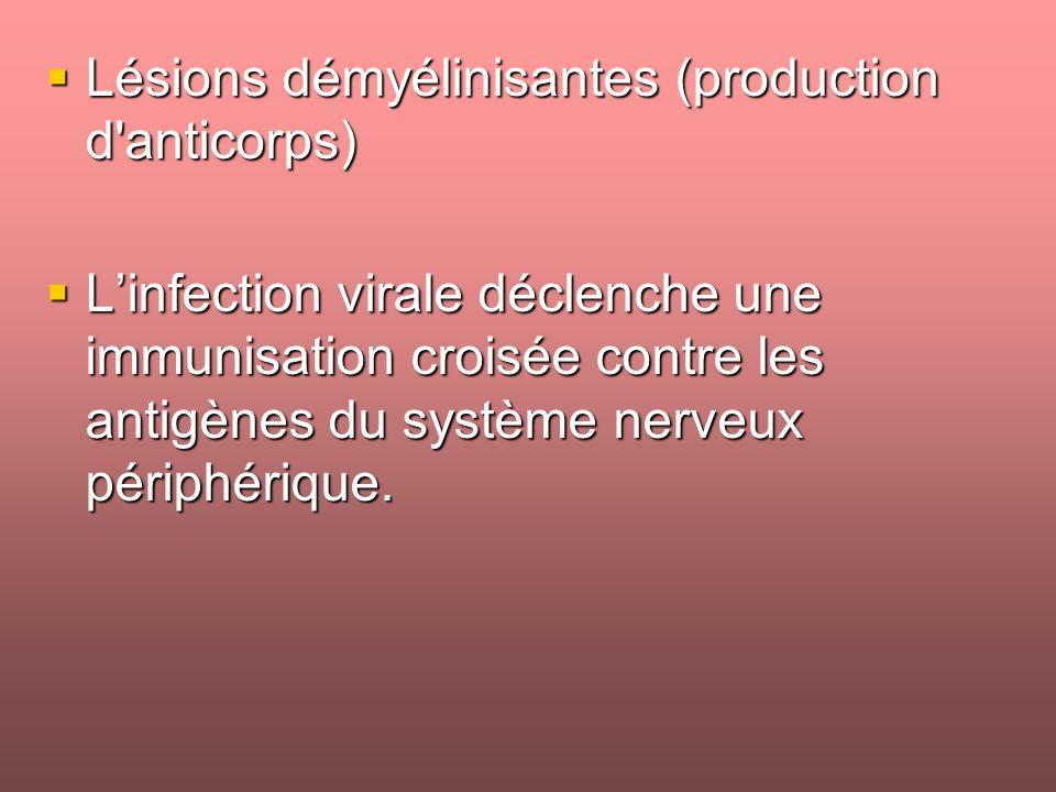 Lésions démyélinisantes (production d anticorps) Lésions démyélinisantes (production d anticorps) Linfection virale déclenche une immunisation croisée contre les antigènes du système nerveux périphérique.