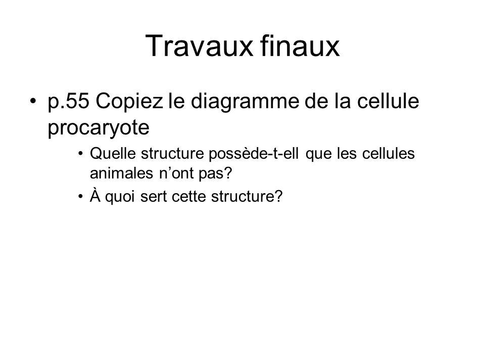 Travaux finaux p.55 Copiez le diagramme de la cellule procaryote Quelle structure possède-t-ell que les cellules animales nont pas? À quoi sert cette