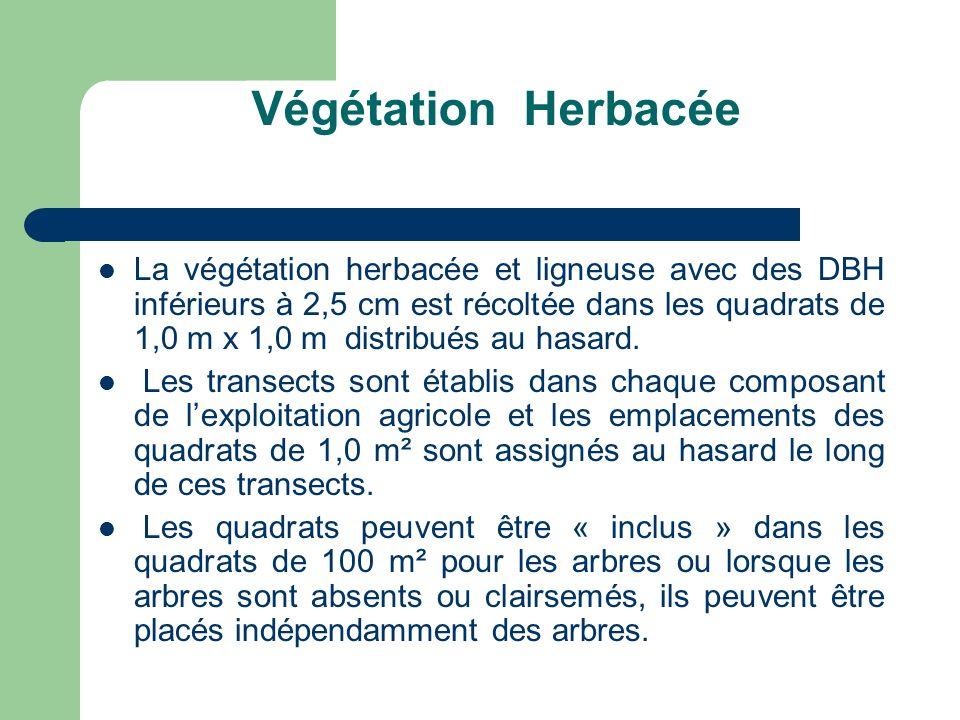 Végétation Herbacée La végétation herbacée et ligneuse avec des DBH inférieurs à 2,5 cm est récoltée dans les quadrats de 1,0 m x 1,0 m distribués au hasard.