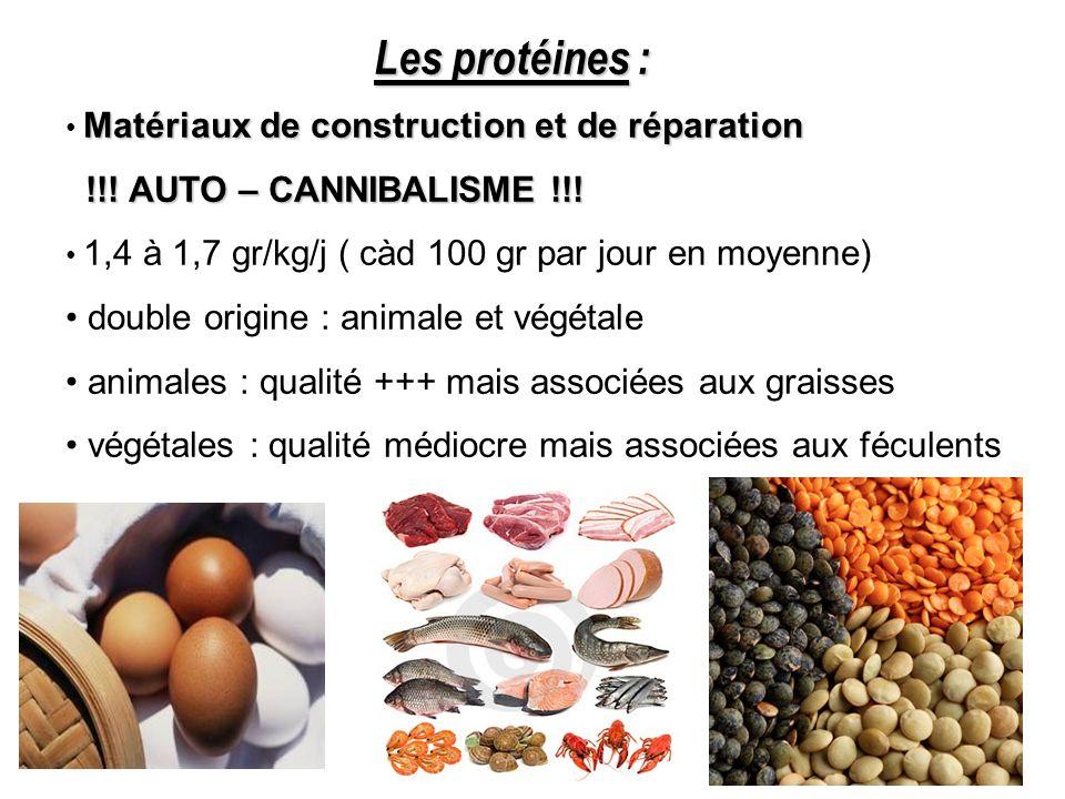 Les protéines : Matériaux de construction et de réparation !!! AUTO – CANNIBALISME !!! !!! AUTO – CANNIBALISME !!! 1,4 à 1,7 gr/kg/j ( càd 100 gr par
