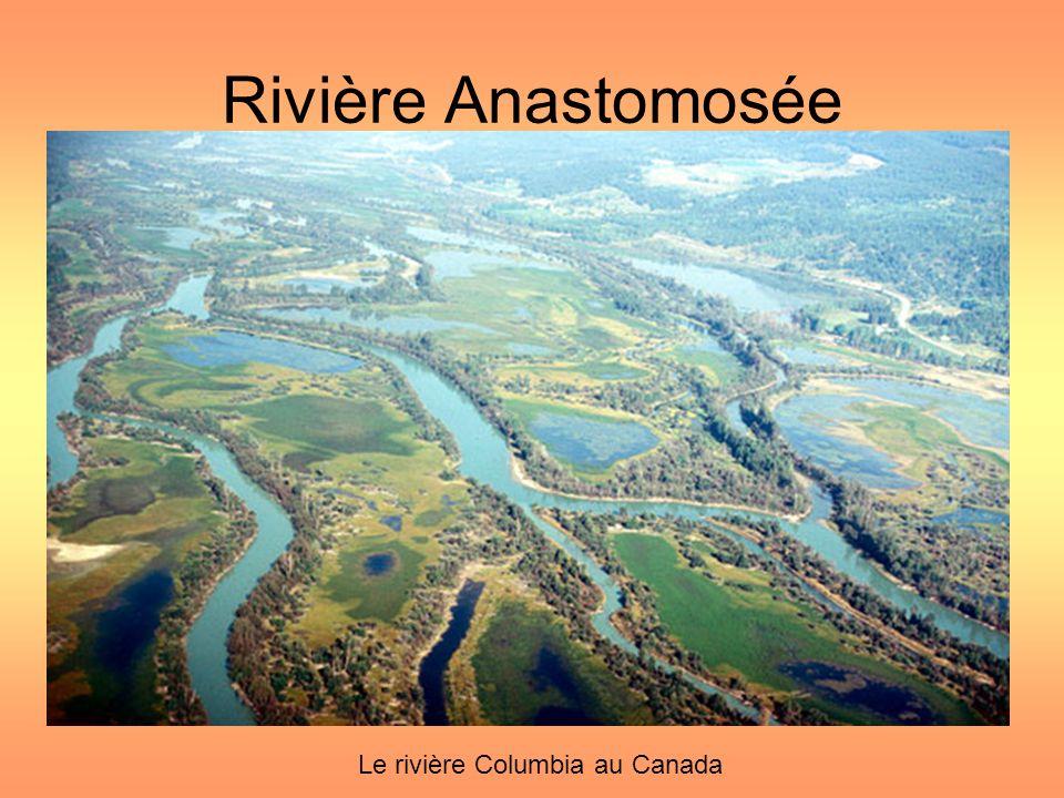 Rivière Anastomosée Le rivière Columbia au Canada