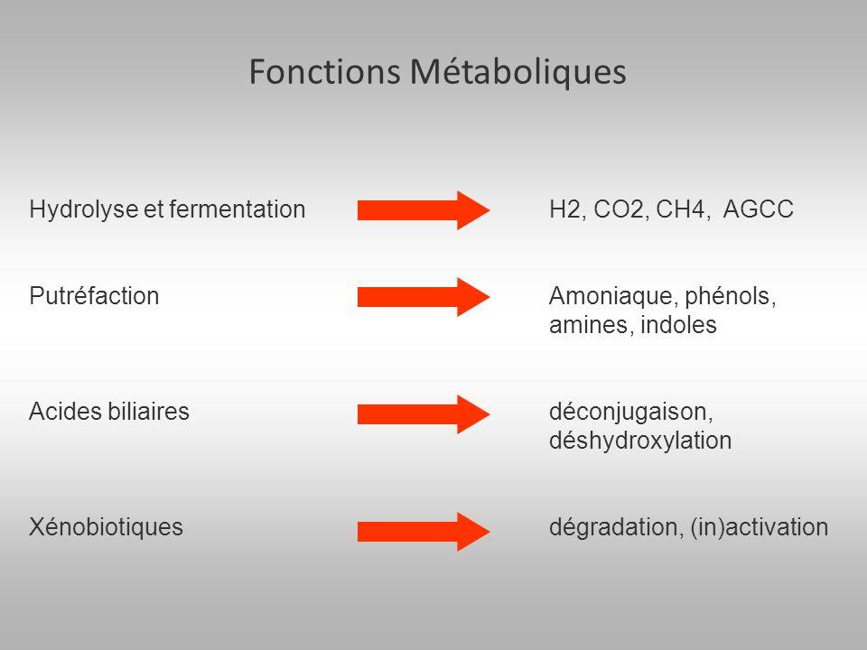 Fonctions Métaboliques Hydrolyse et fermentation H2, CO2, CH4, AGCC Putréfaction Amoniaque, phénols, amines, indoles Acides biliairesdéconjugaison, déshydroxylation Xénobiotiquesdégradation, (in)activation