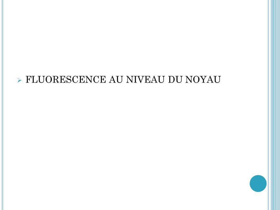 FLUORESCENCE HOMOGÈNE