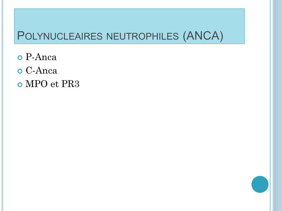 A NTICORPS ANTI - CYTOPLASME ANCA Dépistage par IF sur polynucléaires neutrophiles C-ANCA et P-ANCA Anti-PR3 (souvent c-Anca) évocateur de la granulomatose de Wegener Anti-MPO (souvent p-Anca) sont retrouvés dans la maladie de Churg et Strauss, la polyangéite microscopique et les glomérulonéphrites nécrosantes pauci-immunes.