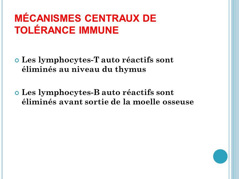 MÉCANISMES PÉRIPHÉRIQUES DE TOLÉRANCE IMMUNE Les mécanismes centraux de tolérance immune sont incomplets, et un certain nombre de lymphocytes auto réactifs y échappent Ces lymphocytes circulants sont maintenus inactifs par toute une série de mécanismes Les maladies auto immunes peuvent donc avoir une origine centrale (thymus),ou périphérique