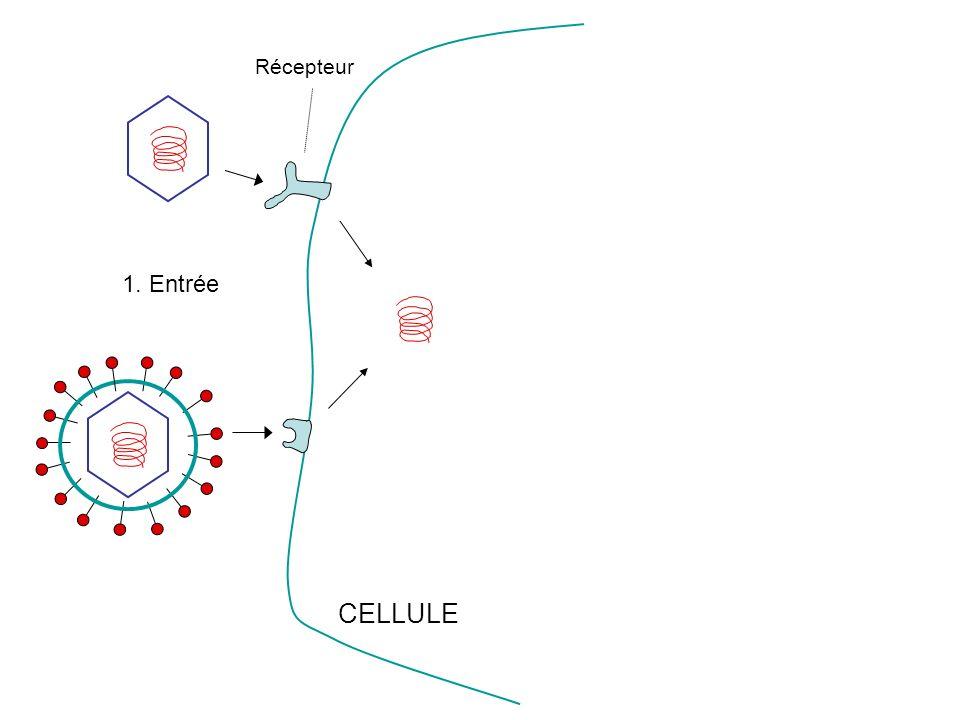 Récepteur CELLULE 1. Entrée