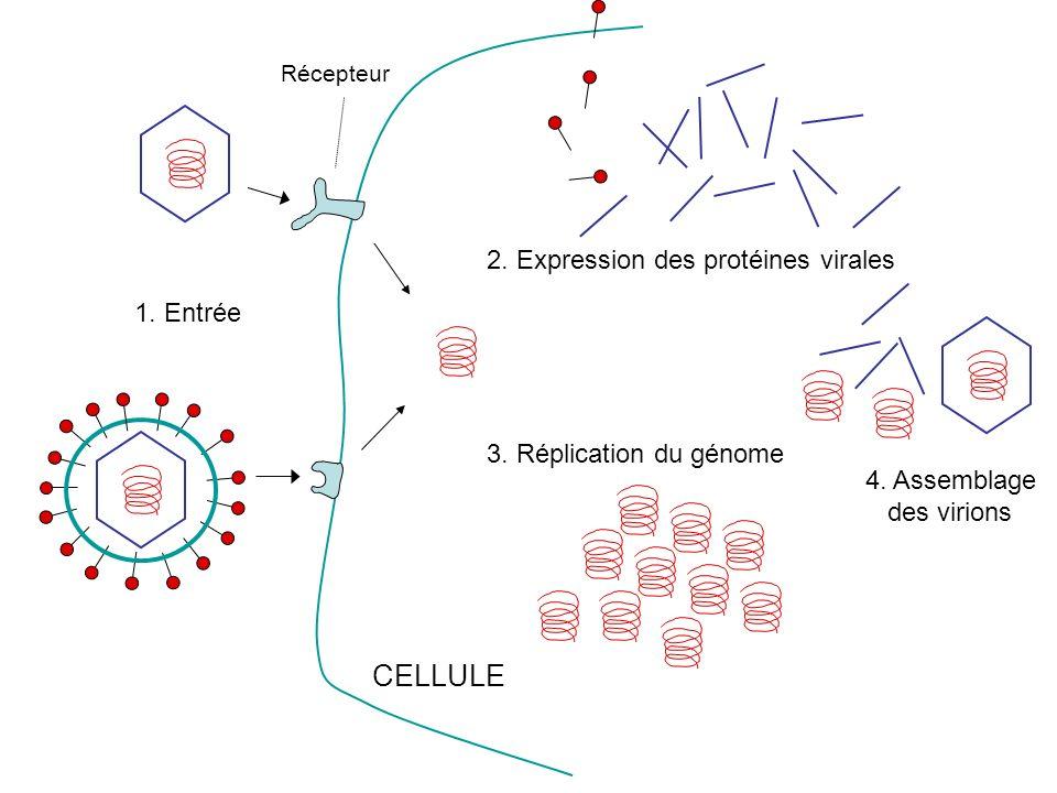 Récepteur CELLULE 2. Expression des protéines virales 3. Réplication du génome 4. Assemblage des virions 1. Entrée