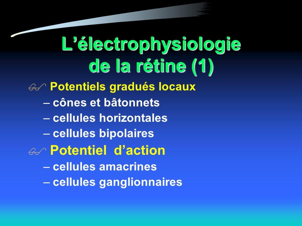 Lélectrophysiologie de la rétine (1) Potentiels gradués locaux –cônes et bâtonnets –cellules horizontales –cellules bipolaires Potentiel daction –cellules amacrines –cellules ganglionnaires