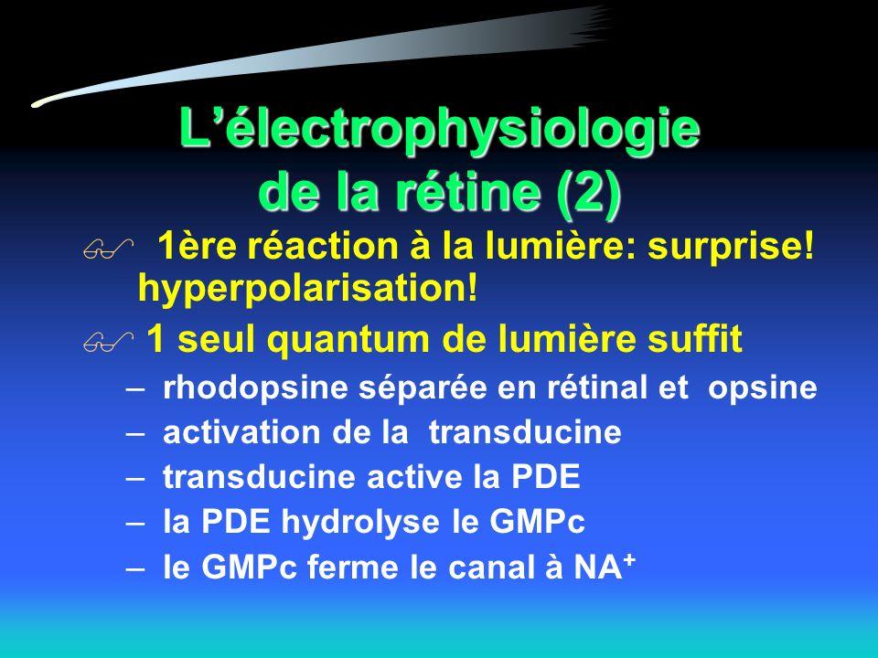 Lélectrophysiologie de la rétine (2) 1ère réaction à la lumière: surprise.