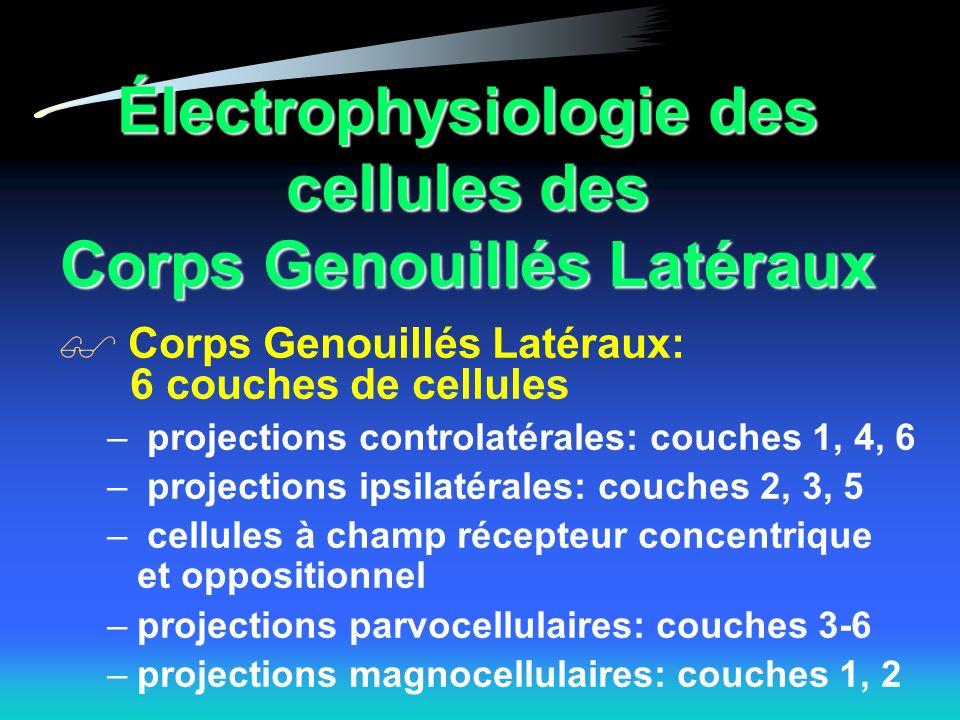 Électrophysiologie des cellules des Corps Genouillés Latéraux Corps Genouillés Latéraux: 6 couches de cellules – projections controlatérales: couches 1, 4, 6 – projections ipsilatérales: couches 2, 3, 5 – cellules à champ récepteur concentrique et oppositionnel –projections parvocellulaires: couches 3-6 –projections magnocellulaires: couches 1, 2