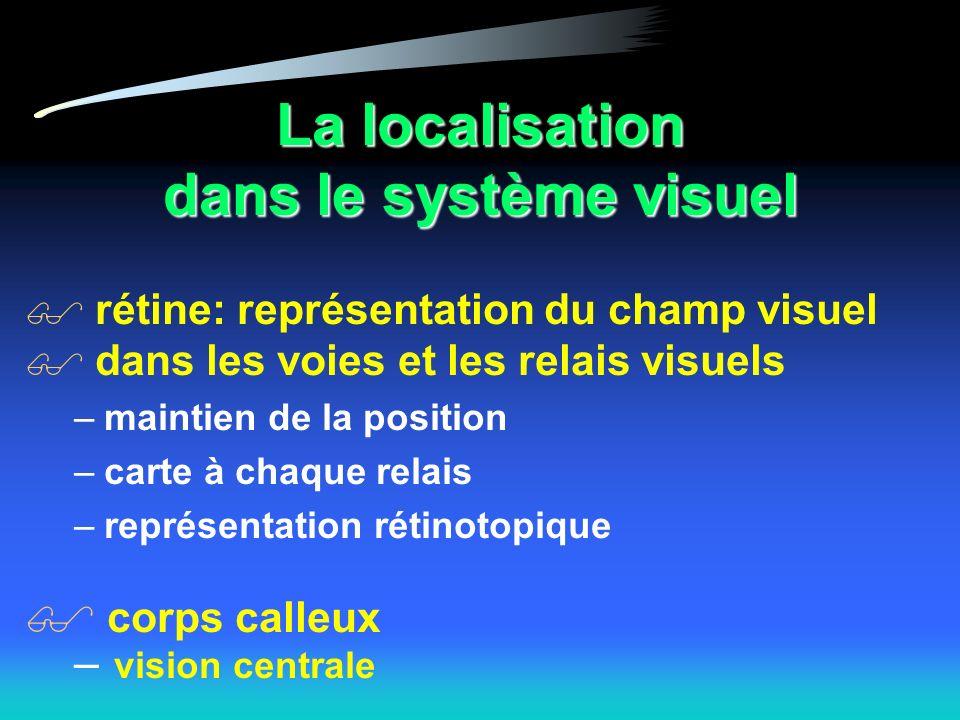 La localisation dans le système visuel rétine: représentation du champ visuel dans les voies et les relais visuels –maintien de la position –carte à chaque relais –représentation rétinotopique corps calleux – vision centrale