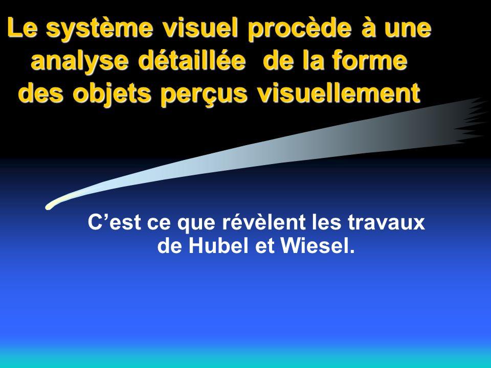 Le système visuel procède à une analyse détaillée de la forme des objets perçus visuellement Cest ce que révèlent les travaux de Hubel et Wiesel.