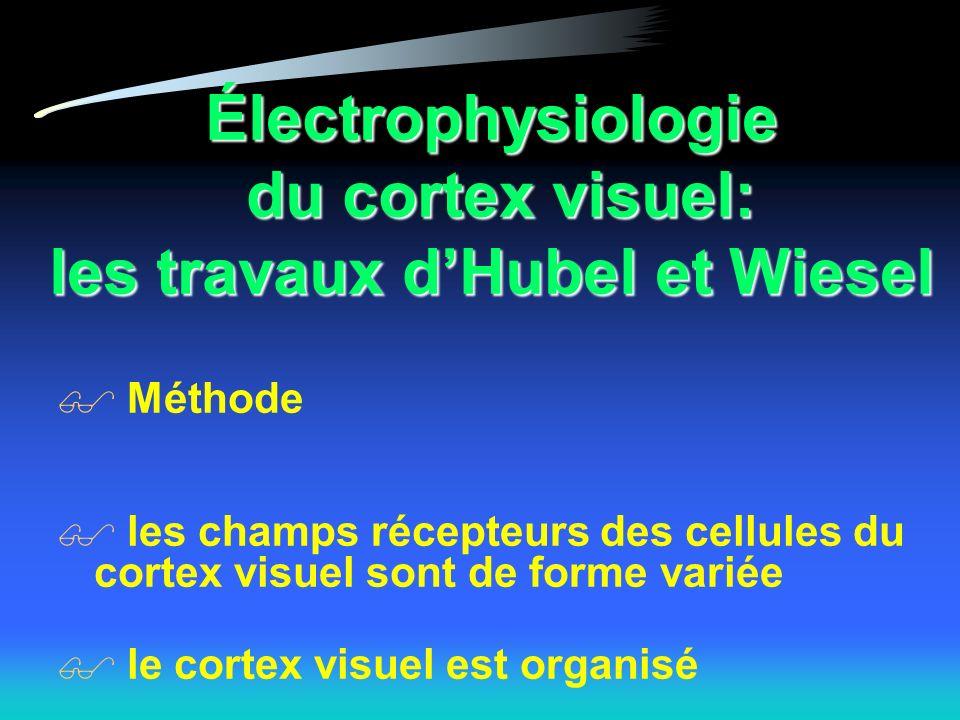Électrophysiologie du cortex visuel: les travaux dHubel et Wiesel Méthode les champs récepteurs des cellules du cortex visuel sont de forme variée le cortex visuel est organisé