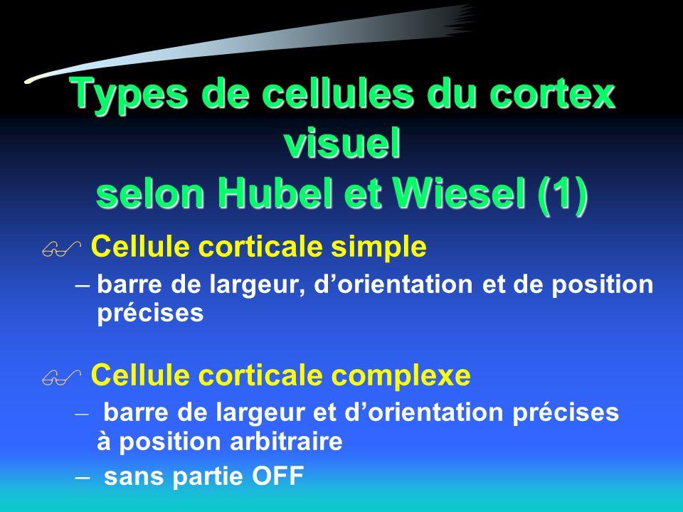 Types de cellules du cortex visuel selon Hubel et Wiesel (1) Cellule corticale simple –barre de largeur, dorientation et de position précises Cellule corticale complexe – barre de largeur et dorientation précises à position arbitraire – sans partie OFF