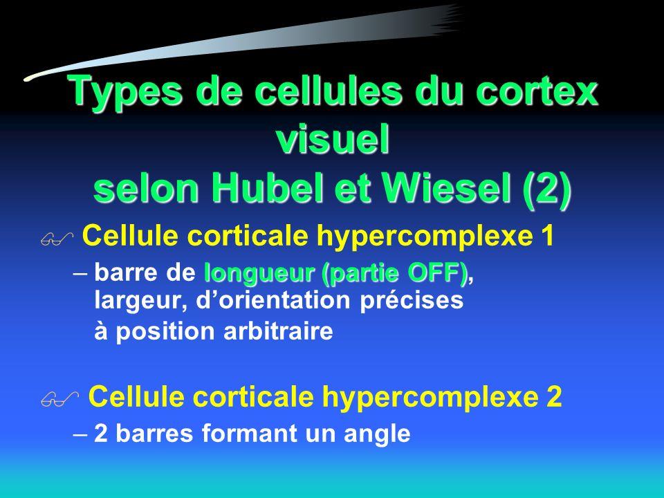 Types de cellules du cortex visuel selon Hubel et Wiesel (2) Cellule corticale hypercomplexe 1 longueur (partie OFF) –barre de longueur (partie OFF), largeur, dorientation précises à position arbitraire Cellule corticale hypercomplexe 2 –2 barres formant un angle