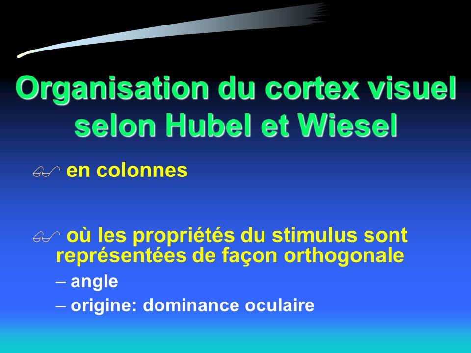 Organisation du cortex visuel selon Hubel et Wiesel en colonnes où les propriétés du stimulus sont représentées de façon orthogonale –angle –origine: dominance oculaire