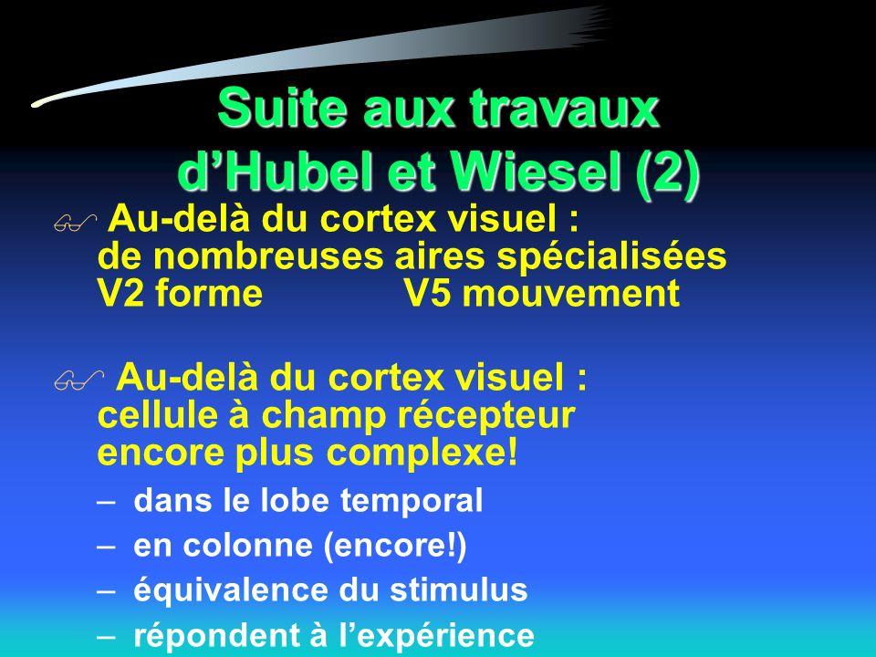 Suite aux travaux dHubel et Wiesel (2) Au-delà du cortex visuel : de nombreuses aires spécialisées V2 formeV5 mouvement Au-delà du cortex visuel : cellule à champ récepteur encore plus complexe.