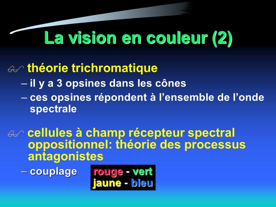 La vision en couleur (2) théorie trichromatique –il y a 3 opsines dans les cônes –ces opsines répondent à lensemble de londe spectrale cellules à champ récepteur spectral oppositionnel: théorie des processus antagonistes –couplagerouge - vert jaune - bleu –couplage rouge - vert jaune - bleu