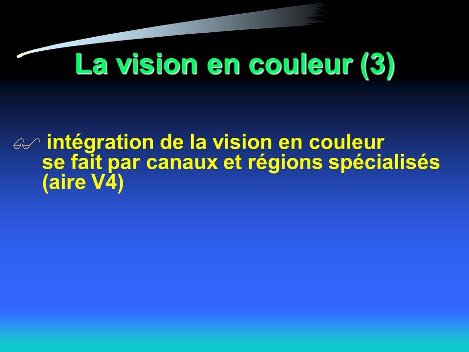 La vision en couleur (3) intégration de la vision en couleur se fait par canaux et régions spécialisés (aire V4)