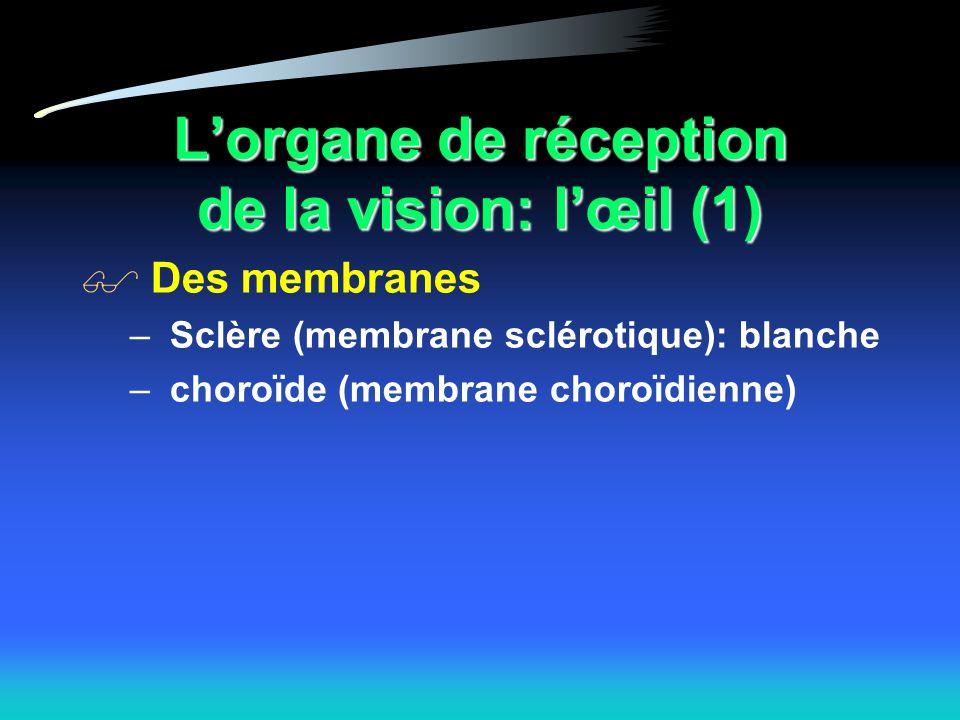 Lorgane de réception de la vision: lœil (1) Des membranes – Sclère (membrane sclérotique): blanche – choroïde (membrane choroïdienne)