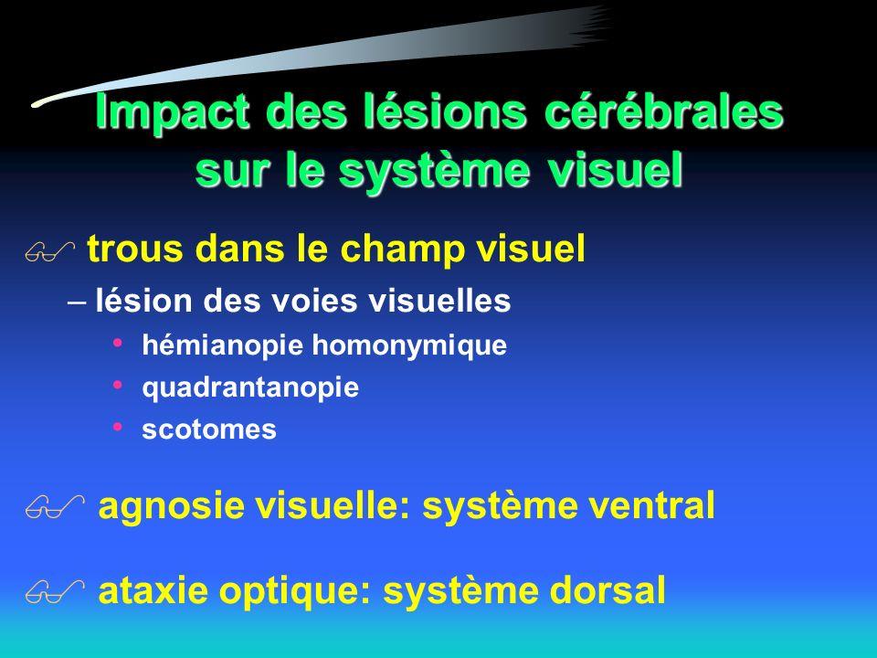 Impact des lésions cérébrales sur le système visuel trous dans le champ visuel –lésion des voies visuelles hémianopie homonymique quadrantanopie scotomes agnosie visuelle: système ventral ataxie optique: système dorsal
