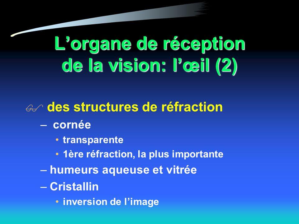 Lorgane de réception de la vision: lœil (2) des structures de réfraction – cornée transparente 1ère réfraction, la plus importante –humeurs aqueuse et vitrée –Cristallin inversion de limage
