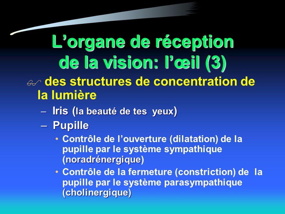 Lorgane de réception de la vision: lœil (3) des structures de concentration de la lumière – Iris ( la beauté de tes yeux ) – Pupille noradrénergiqueContrôle de louverture (dilatation) de la pupille par le système sympathique (noradrénergique) (cholinergique)Contrôle de la fermeture (constriction) de la pupille par le système parasympathique (cholinergique)