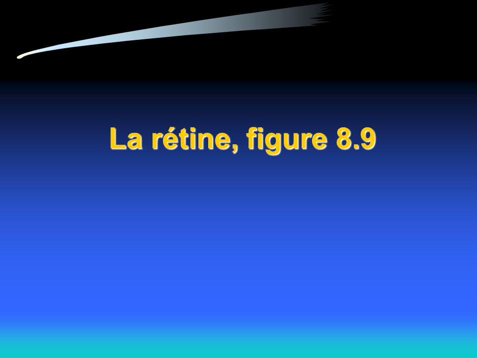 La rétine, figure 8.9