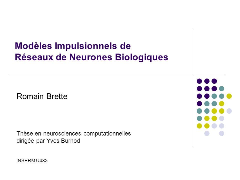 Modèles Impulsionnels de Réseaux de Neurones Biologiques Romain Brette Thèse en neurosciences computationnelles dirigée par Yves Burnod INSERM U483