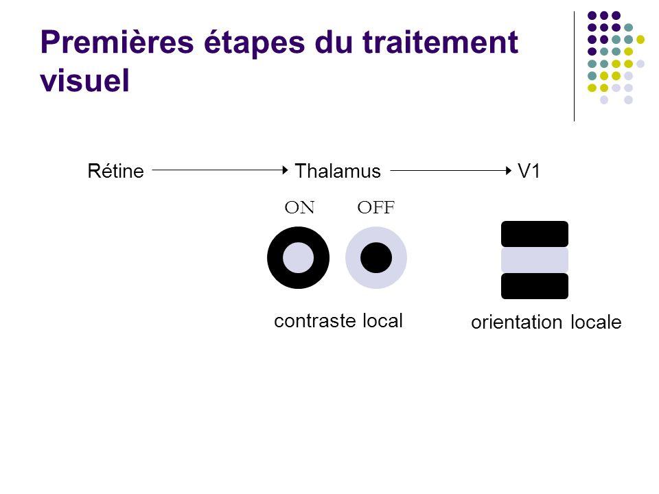 ThalamusV1 ONOFF contraste local orientation locale Rétine Premières étapes du traitement visuel