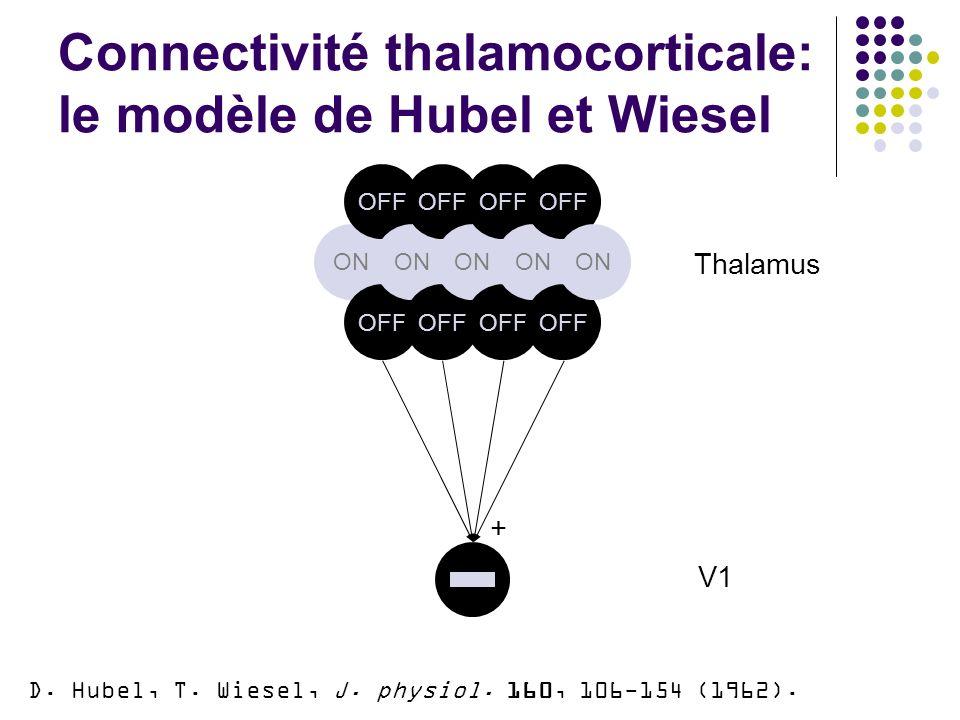 Connectivité thalamocorticale: le modèle de Hubel et Wiesel ON OFF ON OFF ON OFF ON OFF ON Thalamus V1 + D.