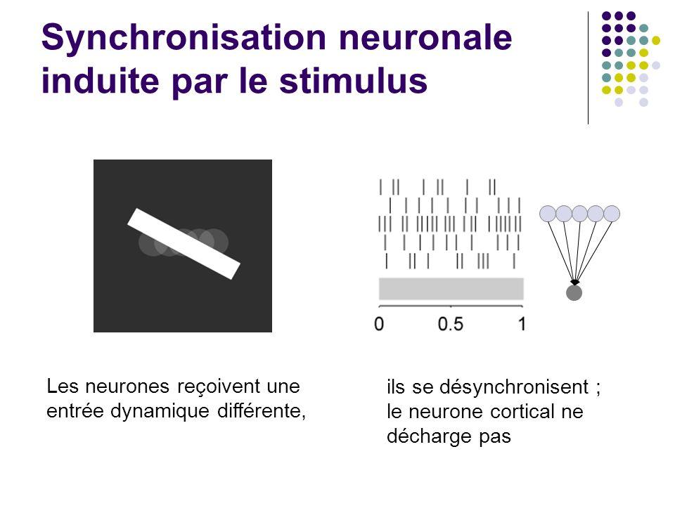 Synchronisation neuronale induite par le stimulus Les neurones reçoivent une entrée dynamique différente, ils se désynchronisent ; le neurone cortical ne décharge pas