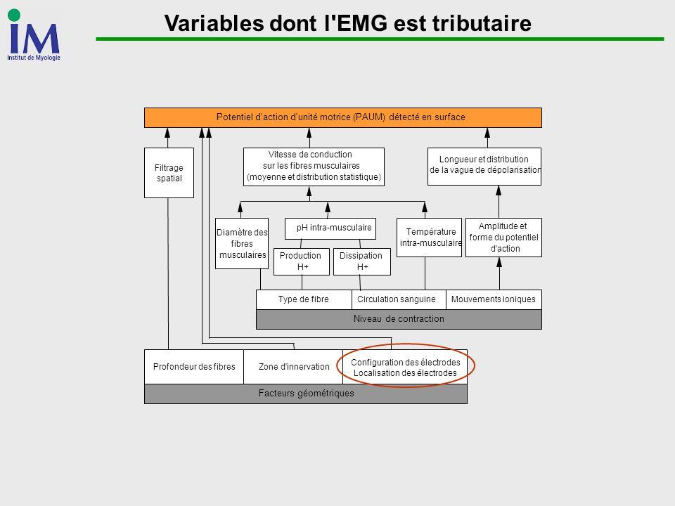 Variables dont l'EMG est tributaire Potentiel d'action d'unité motrice (PAUM) détecté en surface Filtrage spatial Vitesse de conduction sur les fibres