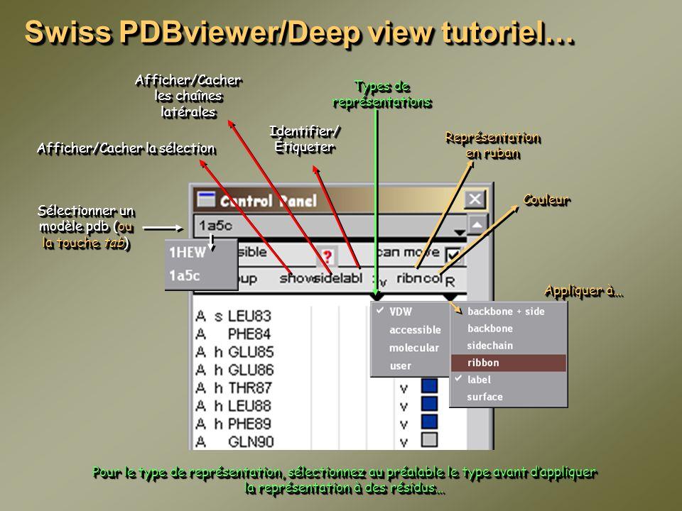Types de représentations Sélectionner un modèle pdb (ou la touche tab) Swiss PDBviewer/Deep view tutoriel… Afficher/Cacher la sélection Afficher/Cache