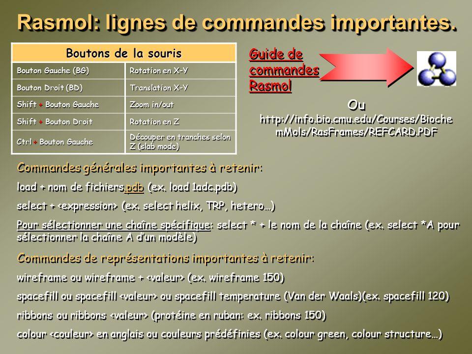 Rasmol: lignes de commandes importantes. Boutons de la souris Bouton Gauche (BG) Rotation en X-Y Bouton Droit (BD) Translation X-Y Shift + Bouton Gauc
