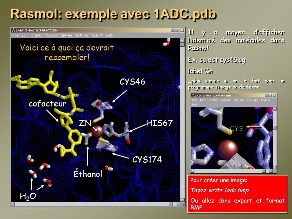 Rasmol: exemple avec 1ADC.pdb Voici ce à quoi ça devrait ressembler! Éthanol cofacteur H2OH2O H2OH2O CYS46 CYS174 HIS67 ZN Il y a moyen dafficher lide