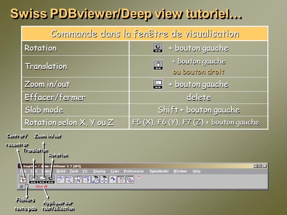 Swiss PDBviewer/Deep view tutoriel… Commande dans la fenêtre de visualisation Rotation + bouton gauche Translation ou bouton droit Zoom in/out + bouto