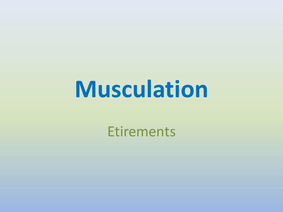 Le muscle Le muscle est constitué de trois types de tissus : musculaire, conjonctif et nerveux.