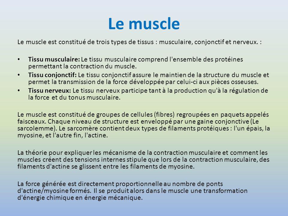 Le muscle Le muscle est constitué de trois types de tissus : musculaire, conjonctif et nerveux. : Tissu musculaire: Le tissu musculaire comprend l'ens