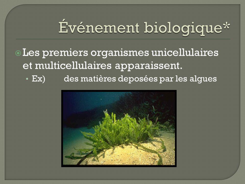 Les premiers organismes unicellulaires et multicellulaires apparaissent. Ex) des matières deposées par les algues