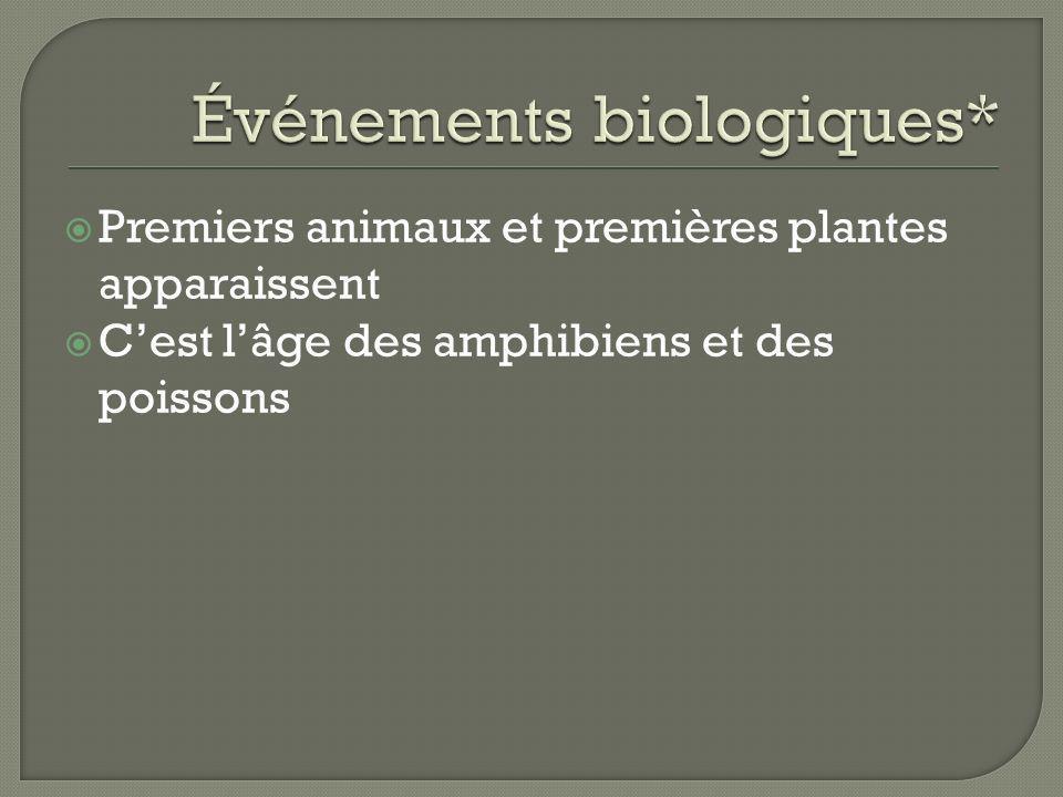 Premiers animaux et premières plantes apparaissent Cest lâge des amphibiens et des poissons