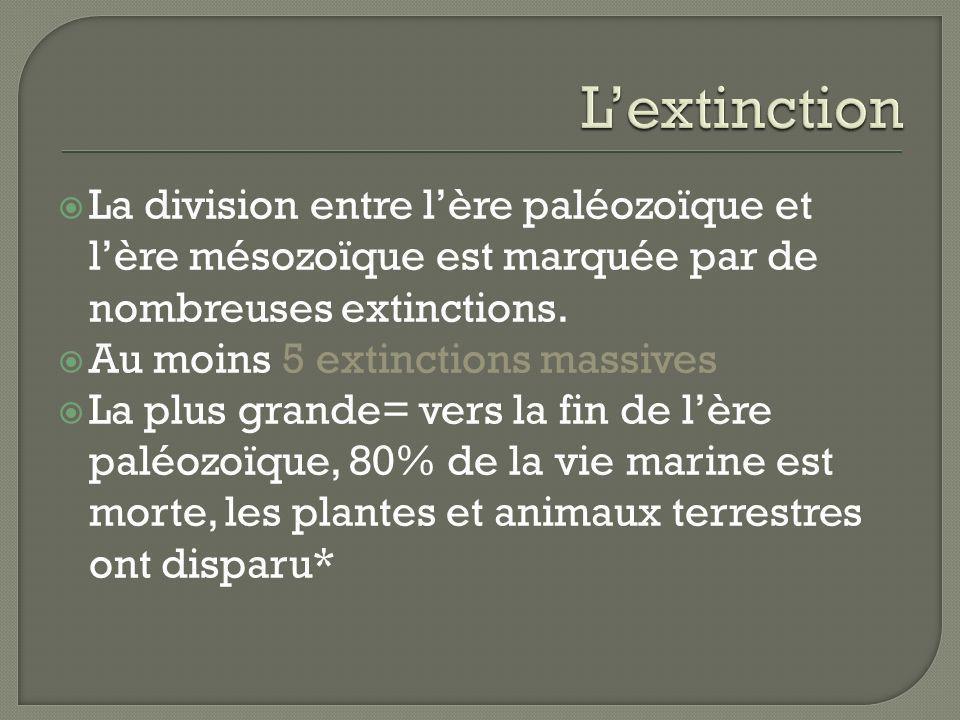 La division entre lère paléozoïque et lère mésozoïque est marquée par de nombreuses extinctions. Au moins 5 extinctions massives La plus grande= vers
