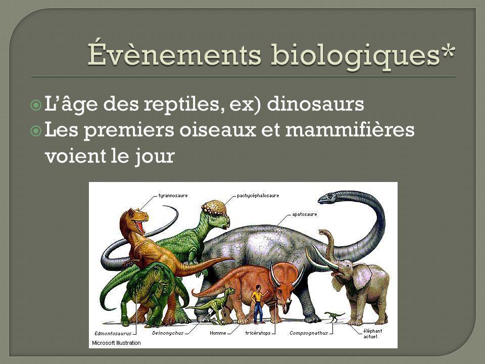 Lâge des reptiles, ex) dinosaurs Les premiers oiseaux et mammifières voient le jour